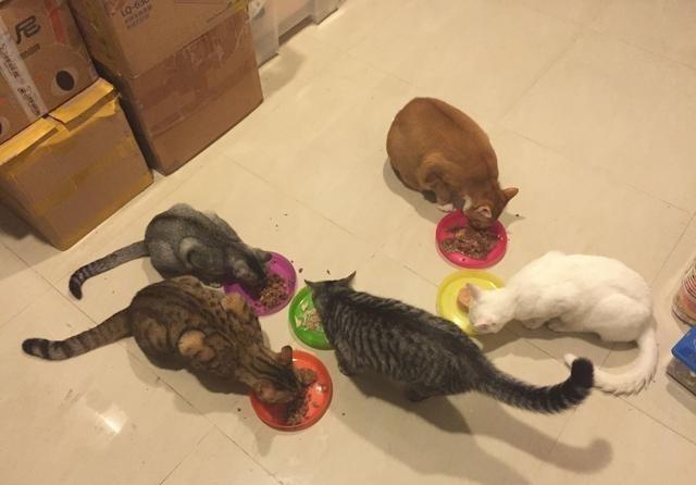短短三年,家里就从1只猫变成了20只猫的大家庭