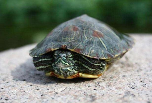 """""""千年王八万年龟""""的下半句,有一定的警示意味,你知道是什么?"""