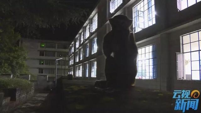 普洱景東:猴哥大鬧校園
