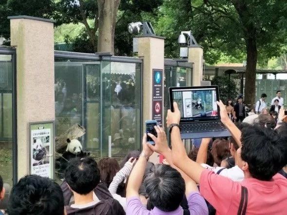 日本人挤爆动物园 只为看这只新生的