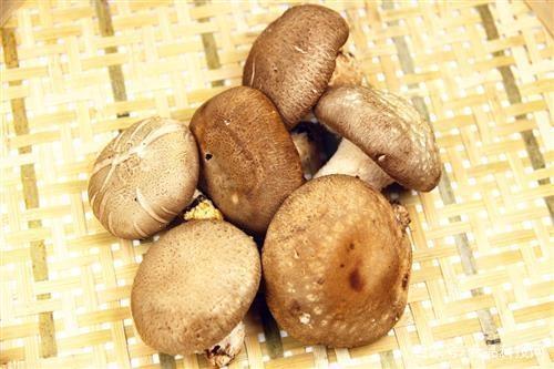 """香菇被称为""""山珍之王"""",秋冬滋补吃点"""