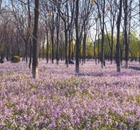 旅游:将府公园——摄影者的天堂,北京赏花的绝对好去处
