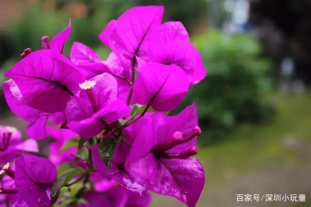 11月深圳5大赏花圣地(时间、地点和路线