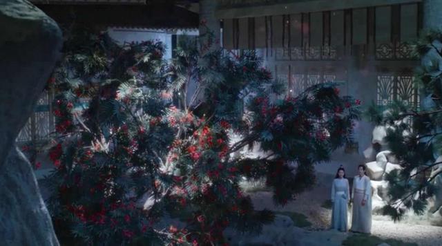 锦觅送给旭凤凤凰花 世间真的有这种花吗?|养护管理-南阳花千谷苗木种植有限公司