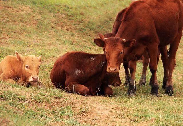 不愧是生肖牛啊,真是牛,真的牛!