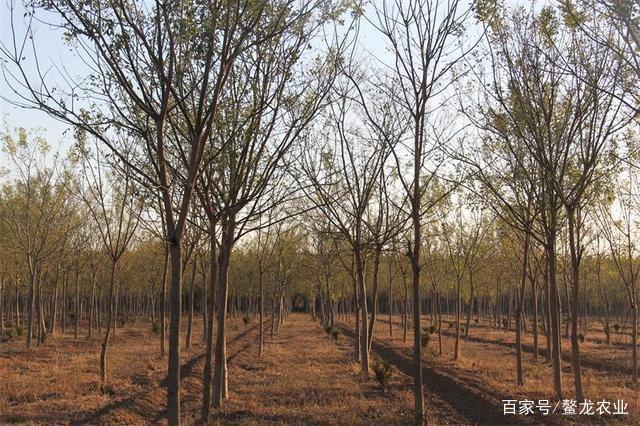 鳌龙生态园:植树造林益处多,绿化家园好生活