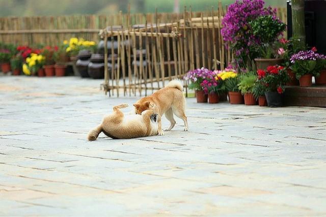 怎么才能让狗狗听话,学会这5个训狗技巧就可以了