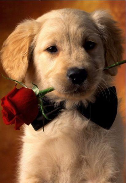 什么狗最好养?适合家养的十大狗狗排行
