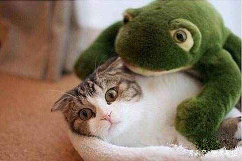 搞笑图片动物篇:你这个表情是被人欺负了么?