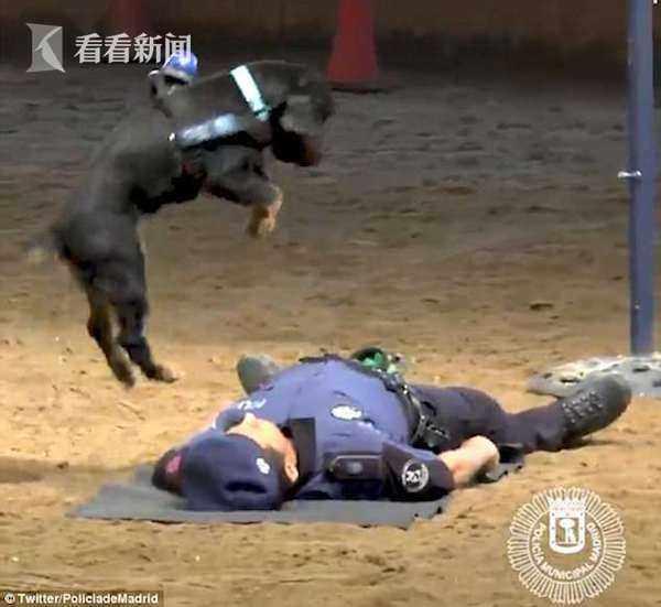 男子假装晕倒测试身边的羊崽 接下来一幕让人意想不到(图)