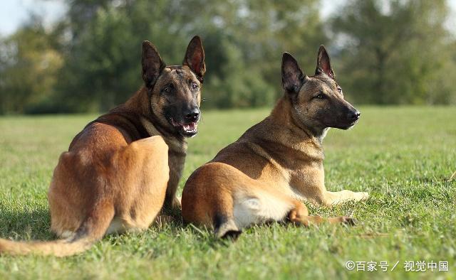 为人类做出巨大贡献的狗,你真的了解它们吗?(上)