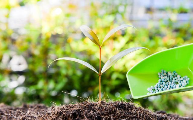 复合肥和有机肥混合用,效果怎么样?