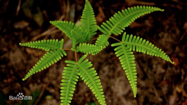 四川特产植物图片
