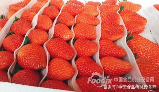 从新鲜草莓中吃出银针?且看金属探测器守护食安