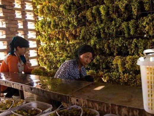 葡萄干吃前到底要不要清洗?听新疆果农说出真相,很多人都吃错了