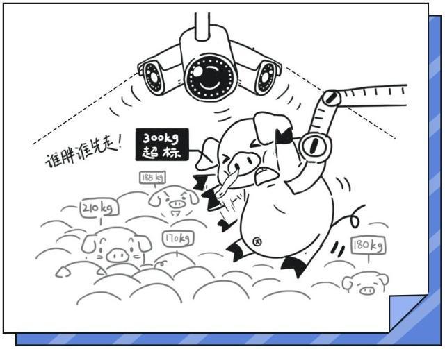 """中国养猪哪家强?京东携""""猪脸识别"""",杀入万亿养猪大业!"""