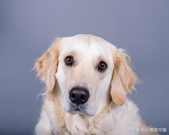 """生肖狗,12月要留心一个人,因为他可能会是你的命中""""贵人""""! 第3张"""