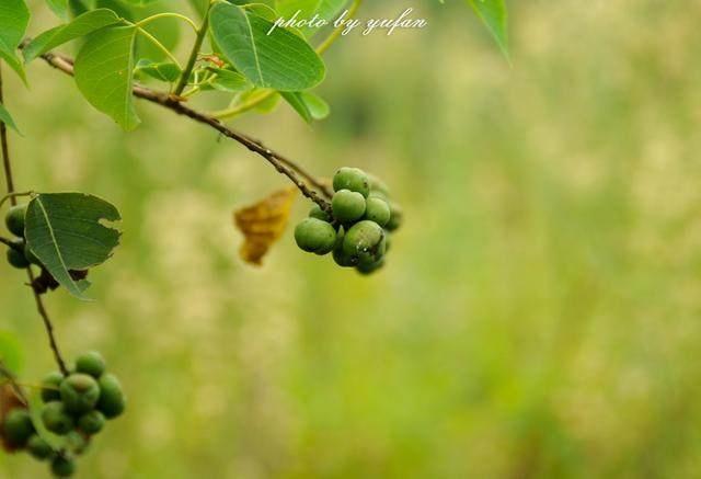这些田园植物你认得几种?据说认得十种可称大神