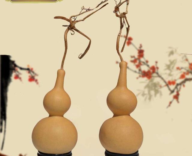 普通的葫芦种子能种出手捻小葫芦吗?教你种植手捻小葫芦!
