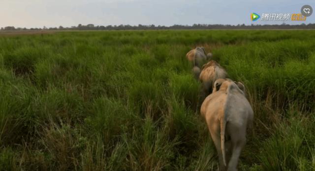 纪录片部落-纪录片从业者门户:纪录片 《地球脉动》第一季第二季合集高清下载