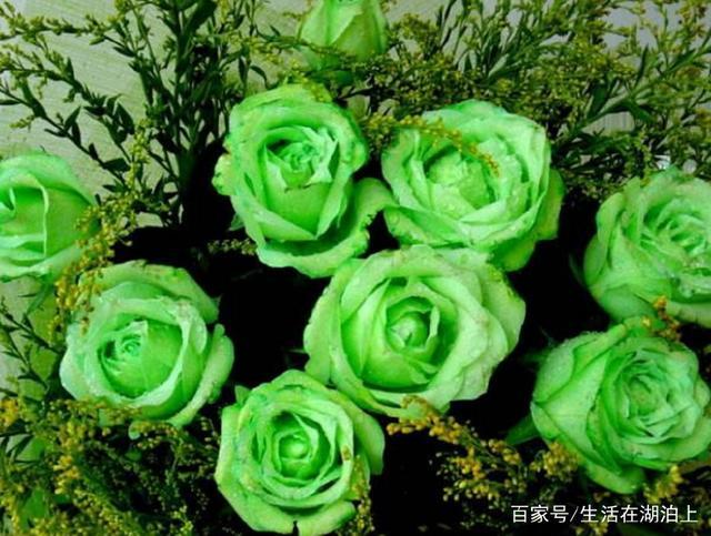 世界上最「罕見」的五種花,一個比一個珍貴,最後一個只在晚上開