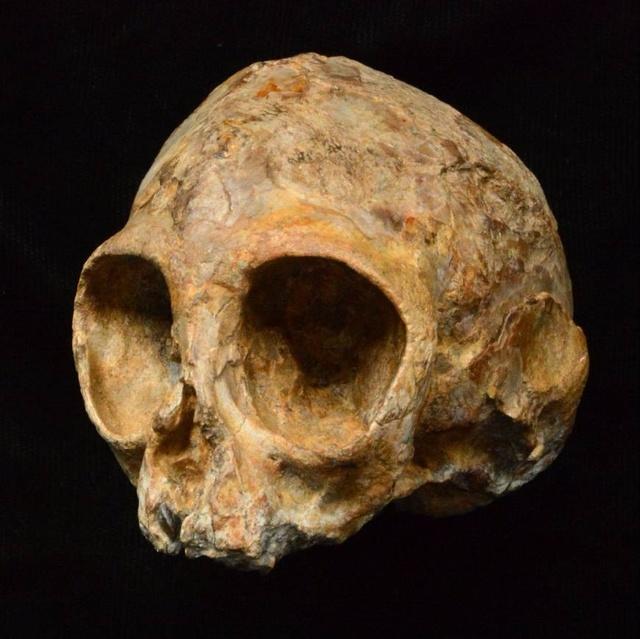 1300萬年前人類的起源,竟然是這樣的一個猿猴?