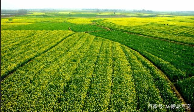 密密麻麻的田埂,这不是诗,不是画,是农人的汗水
