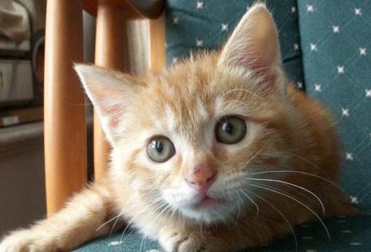 五周大的小猫怎么喂养图片
