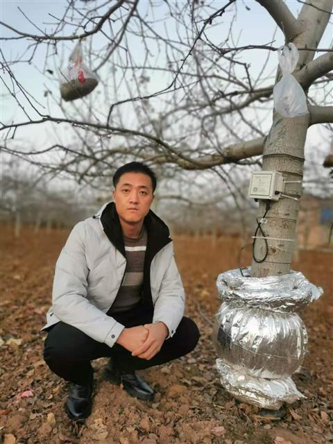 """介入種植端改良土壤,陜西果農種出""""數字化""""蘋果"""