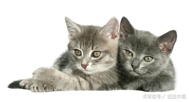 猫咪喜欢蹭来蹭去的是什么原因?